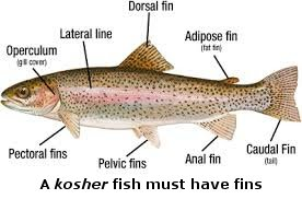 NCCG ORG Kosher, Kashrut, Food Laws